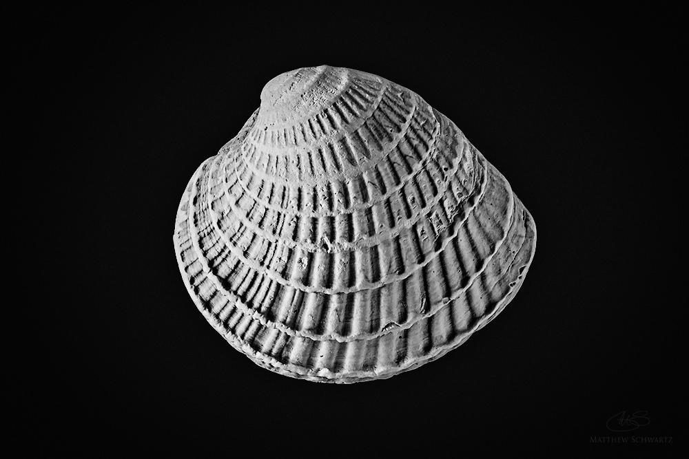 ©Matthew Schwartz, Shell, 8 image stack