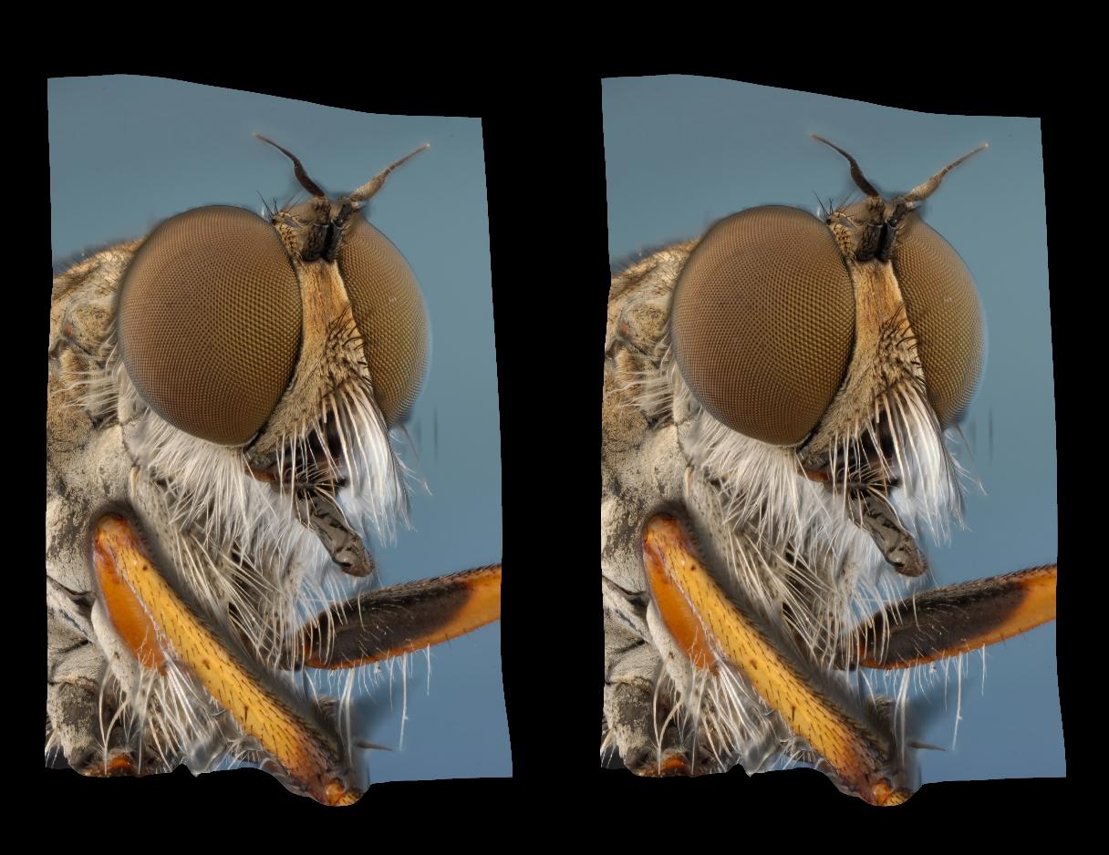 мастику вырезать стереофотографии в очках для смартфона оригинальные конструкции
