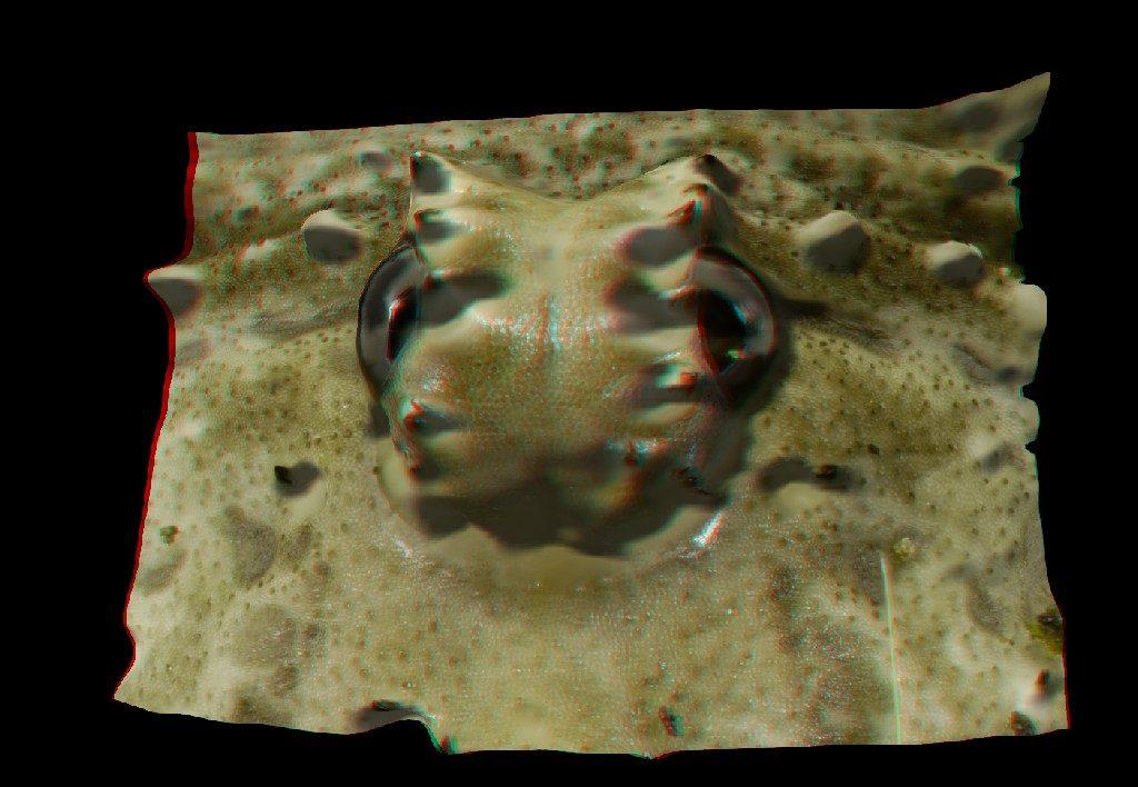 3D изображение Сенокосца, созданное в программе Helicon 3D Viewer